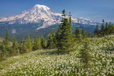 USA, Washington, Mount Rainier NP. Avalanche Lilies and Mount Rainier Photographic Print by Jaynes Gallery