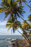 French Guiana, Ile St. Joseph. View of Palm Trees and Rocks on Beach Photographic Print by Alida Latham