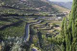 Douro Valley, Terraced Vineyards of Sandeman That Produces Port Wines Photographic Print by Mallorie Ostrowitz
