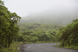 Ecuador, Galapagos, Santa Cruz Island. Forest on the Santa Cruz Road Photographic Print by Kevin Oke