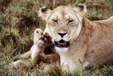 Kenya, Mother Lion Sitting with Her Cub Photographic PrintKent Foster