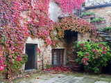 Italy, Tuscany, Volpaia. Red Ivy Covering the Walls of the Buildings Fotografisk tryk af Julie Eggers