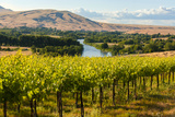 USA, Washington, Red Mountain. Vineyard on with the Yakima River Photographic Print by Richard Duval