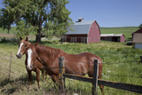 USA, Washington, Palouse Country, Near Pullman. Horses and Red Barn Photographic Print by Charles Cecil