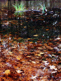 Fallend leaves floating in a pond, Eagle Creek Park, Indianapolis, Indiana, USA Photographic Print by Anna Miller