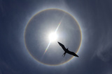 Silhouette of a Bird and Sun Halo. Curacao, Netherlands Antilles Photographic Print by Barry Brown