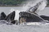 USA, Alaska. Humpback Whales Bubble Net Feeding Photographic Print by Jaynes Gallery