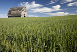 Old Barn in New Wheat Field. Whitman County, Washington, Usa Photographic Print by Charles Cecil