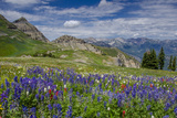Aster, Lupine, Bistort, Indian Paintbrush, Mt Timpanogos, Utah Photographic Print by Howie Garber