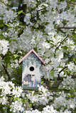Nest Box in Blooming Sugartyme Crabapple Tree, Marion, Illinois, Usa Photographic Print by Richard ans Susan Day