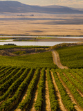 USA, Washington, Pasco. Harvest in Eastern Washington Vineyard Photographic Print by Richard Duval