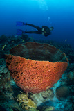Diver Overlooking Giant Barrel Sponge. Curacao, Netherlands Antilles Photographic Print by Barry Brown