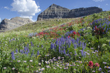 Sticky Aster and Indian Paintbrush, Mt. Timpanogas Wilderness Area Lámina fotográfica por Howie Garber