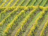 Italy, Tuscany. Steep Hills of Vineyards in the Chianti Region Photographic Print by Julie Eggers