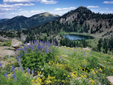 Wildflowers and Lake Catherine, Pioneer Peak, Uinta Wasatch Nf, Utah Photographic Print by Howie Garber
