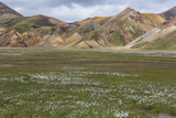 Meadow Landscape in Landmannalaugar, Iceland Photographic Print by Gavriel Jecan