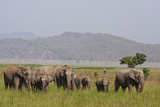 Indian Asian Elephants in the Savannah, Corbett National Park, India Photographic Print by Jagdeep Rajput