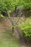 Asia, Japan, Heguri-Cho. Stairway in a Park Photographic Print by Jaynes Gallery