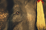 Thailand, Elephant Eye Photographic Print by Russell Young