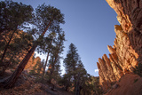 Red Canyon, Dixie National Forest, Utah Photographic Print by Rob Sheppard
