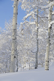 Fresh Snow, Big Cottonwood Canyon, Uinta Wasatch Cache Nf, Utah Photographic Print by Howie Garber