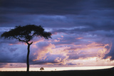 Kenya, Maasai Mara. Sunset after Storm on Plains Photographic PrintKent Foster