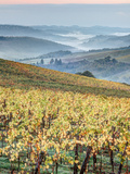 Italy, Tuscany. Vineyard with Foggy Valley Beyond in Chianti Region Photographic Print by Julie Eggers