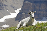Mountain Goat, Mount Timpanogos Wilderness, Wasatch Mountains, Utah Photographic Print by Howie Garber