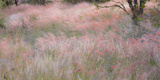 Africa, Namibia, Etosha National Park. Red Grasses Moving in the Wind Photographic Print by Jaynes Gallery