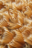 Custer of Social Feather Duster Worms. Curacao, Netherlands Antilles Photographic Print by Barry Brown