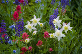 Columbine, Indian Paintbrush, Bluebells, and Lupine, Utah Photographic Print by Howie Garber