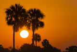 Cabbage Palms at Sunrise, Florida Bay, Everglades NP, Florida, Usa Photographic Print by Maresa Pryor