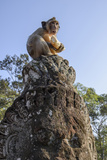 Cambodia, Angkor Wat. Long Tailed Macaque on Statue Photographic Print by Matt Freedman