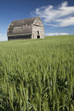 Whitman County, Palouse Country, Washington. Old Barn in Wheat Field Photographic Print by Charles Cecil