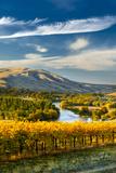 USA, Washington. Harvest Season for Red Mountain Vineyards Reproduction photographique par Richard Duval