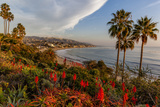 Overlooking Blooming Aloe in Laguna Beach, Ca Reproduction photographique par Andrew Shoemaker