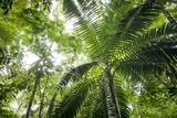 Inside Rainforest, Selva Verde, Costa Rica Photographic Print by Rob Sheppard