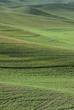 Fields of Wheat and Lentils.Whitman County, Washington, Usa Photographic Print by Charles Cecil
