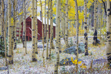 USA, Colorado, Grand Mesa. Solitary Cabin in a Forest Photographic Print by Jaynes Gallery