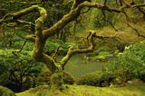 Japanese Maple, Portland Japanese Garden, Portland, Oregon, Usa Fotografiskt tryck av Michel Hersen
