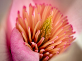 Extreme Close-Up of Flower Photographic Print by Matt Freedman