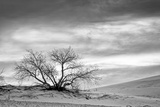 White Sands National Monument, New Mexico Photographic Print by Rob Sheppard