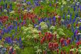 Wildflowers, Mount Timpanogos, Uintah-Wasatch-Cache Nf, Utah Photographic Print by Howie Garber