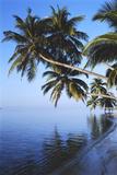 Maldives, Felidhu Atoll, Palm Tress on Beach Photographic Print by Michele Westmorland