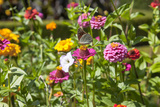 Close Up of Flowers and Butterfly, Country Manor Gardens. Portugal Photographic Print by Mallorie Ostrowitz