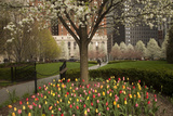 Trees and Tulips in Blloom in Mellon Green, Pittsburgh, Pa Photographic Print by Dave Bartruff