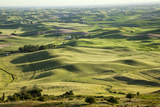Farmland, Steptoe Butte, Palouse Country, Washington, Usa Photographic Print by Charles Cecil