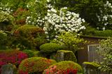 Spring Bloom, Portland Japanese Garden, Portland, Oregon, Usa Photographic Print by Michel Hersen