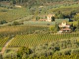 Italy, Tuscany. Vines and Olive Groves of a Rural Village Fotografisk tryk af Julie Eggers