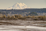 Washington. Mt Rainier in the Distance at the Nisqually Photographic Print by Matt Freedman